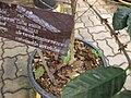 Gardenology.org-IMG 7701 qsbg11mar.jpg