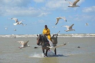 Oostduinkerke - Image: Garnaalvisser te paard