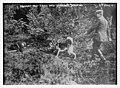 German Red Cross dog seeking wounded LCCN2014698334.jpg
