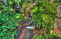Gfp-st-louis-botanical-gardens-waterfall-in-temperate-house.jpg
