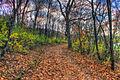 Gfp-wisconsin-indian-lake-park-forest-path.jpg