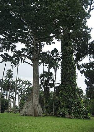 Aburi - Image: Ghana Aburi Botanical gardens (3)