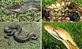 Giant snakes.jpg