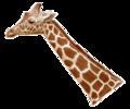 Giraffenhals.png