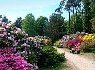 Graal-Müritz - Image: Graal müritz rhododendronpark 1