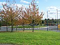 Grange Roundabout - geograph.org.uk - 1014889.jpg