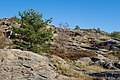 Granite cliffs pine and rowan at Loddebo.jpg
