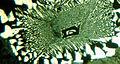 Granophyre 1.5mm.jpg