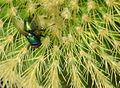 Green Bottle on cactus. (15003294810).jpg