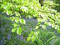 Green and blue - panoramio.jpg