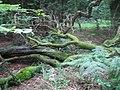 Grim's Ditch, Stockton Wood near Stockton 4 - geograph.org.uk - 569551.jpg