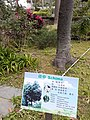 HK 中環 Central 遮打花園 Chater Garden flora green leaves n trees March 2020 SS2 10.jpg