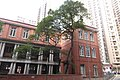 HK Mid-levels 般咸道 Bonham Road 英皇書院 King's College Nov 2017 IX1 無花果 tree Fig 04.jpg