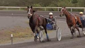 File:Harness racing New Zealand.webm