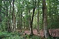 Harrison's Rocks Woods - geograph.org.uk - 1493122.jpg