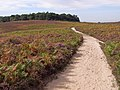 Heathland view towards Hasley Hill, New Forest - geograph.org.uk - 236204.jpg