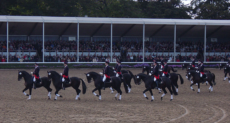 Hengstparade in Warendorf, Germany; riders on black horses, parading.