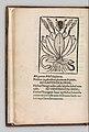 Herbarium MET DP327889.jpg