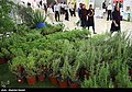 Herbs at Medicinal Plants and Traditional Medicine exhibition in Iran's capital 11.jpg