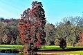 Herbst im Park - Blätter, Bäume, Seeufer und Wege im Wandel der Jahreszeiten. (4).jpg