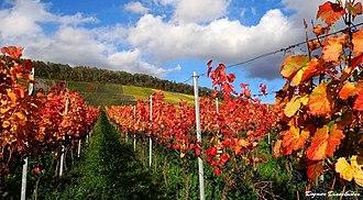 Korb - Autumn in Korb