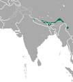 Himalayan Shrew area.png