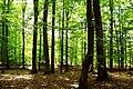 Hinrichshagener Wald 05-07-2010 01.jpg