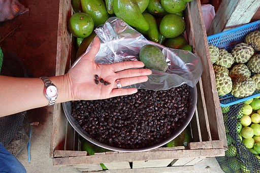 "Hormiga ""siquisapa"" mercado Tarapoto (Peru)"