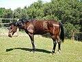 Horse Folsom 601 - panoramio.jpg