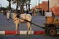 Horse and Carriage (4260744806).jpg