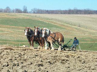 Horses at work 02.jpg