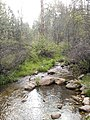 Horton Creek Trail, Payson, Arizona - panoramio (10).jpg