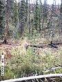 Hosford Creek Water Quality Testing, Yukon-Charley Rivers, 2003 2 (7858c37e-1455-487b-95cc-2e9fe7704a95).jpg