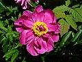Hugeflower4.jpg