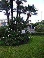 I giardini e la fontana.jpg