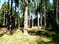 Idarwald – Nähe Idarkopf - panoramio (2).jpg