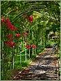Il roseto di villa Grimaldi - panoramio.jpg