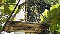 Ilha do mel por Edson Castro 20.jpg