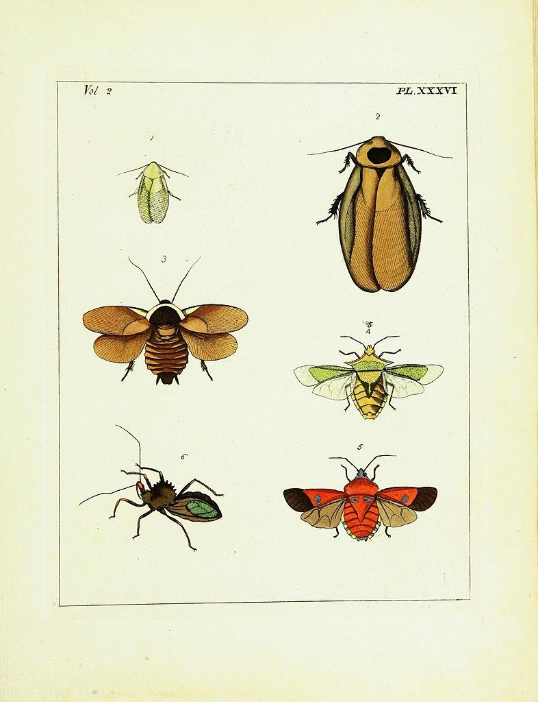 Natural History Xxxvi