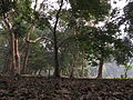 Indian Botanic Garden - Howrah 2012-01-29 1674.JPG
