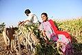 Indian village peoples 40.jpg