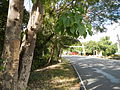 Infanta,Pangasinanjf0151 21.JPG