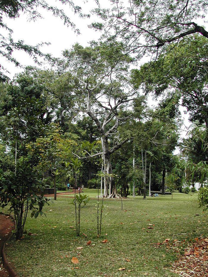Mus um d 39 histoire naturelle monument historique saint for 9 jardin fatima bedar saint denis