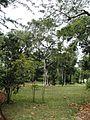 Intérieur-Jardin-État-Réunion.JPG