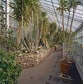 Interieur, overzicht van een deel van de tropische kas - Haren - 20334343 - RCE.jpg