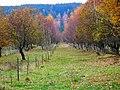 Iron Curtain Legacy - panoramio.jpg