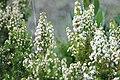 Italy sardinia2008-02-25 (14).JPG
