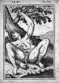 J. Casserius, Tabulae anatomicae LXXIXX Wellcome L0022377.jpg
