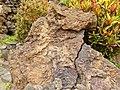 Jameos del Agua - Haria - Lanzarote - Canary Islands - Spain - 07.jpg