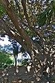 Jardín de la Finca Casa de Ferraz 07.jpg